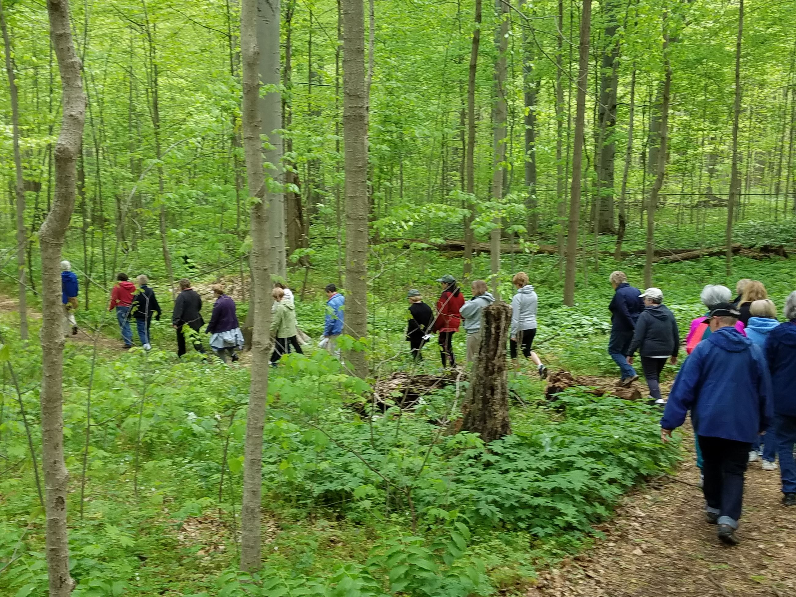 group hikes woodland trail at Bendix Woods County Park