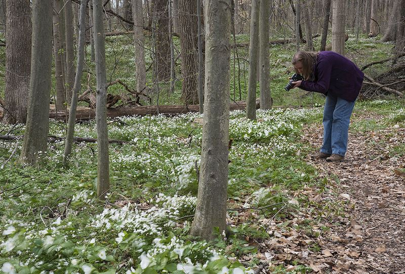 Nature photography on the Bendix Woods Trails